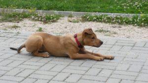 Cuidar a tu mascota en verano