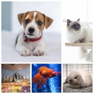 decoración del hogar con mascotas